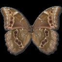 morphodidiusunderside,butterfly icon