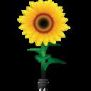 sunflower,flower,flag icon