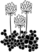 white,clover icon