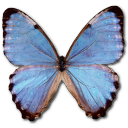 morphopartisthamyris,butterfly icon
