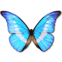 morphohelenapersonal,butterfly icon