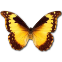 morphodiana,butterfly icon