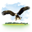 Animals Eagle icon
