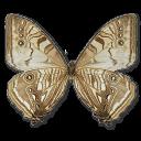 morphosulkowskiunderside,butterfly icon