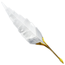 writing, quill, write, feather, antique icon
