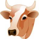 cow,head icon