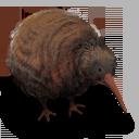 Kiwi Flightless Bird icon