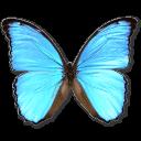 morphodidius,butterfly icon