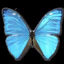 morphoadonishuallegatop,butterfly icon