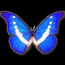 morphohelena,butterfly icon