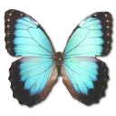 morphopeleidesmontezuma,butterfly icon