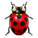 bug, ladybird, insect, animal icon