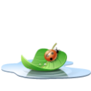 pool leaf icon