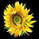 messenger, flower, plant icon
