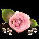 rose,by,artdesigner icon