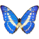 morphocypres,butterfly icon