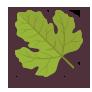 Leaf, Spring icon