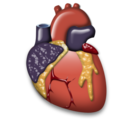 heart, organ, cardiology icon