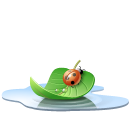 animal, pool, water, leaf, insect, ladybird icon