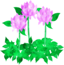 red,clover icon