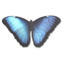 morphopeleides,butterfly icon