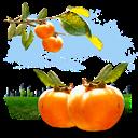 Fruits, Persimmon icon