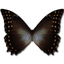 morphoamphitrion,butterfly icon
