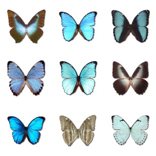 Morpho Butterfly icon sets preview