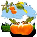 persimmon, fruits icon