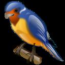 Animal, Bird, Swallow, Twitter icon