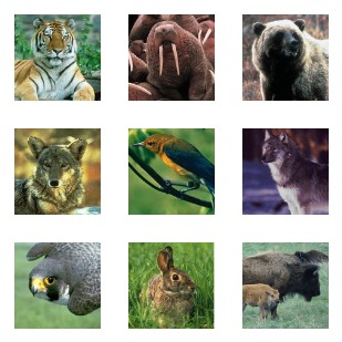 US Fish And Wildlife Service icon sets preview