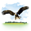 animals, eagle icon