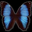 morphodeidamiaerica,butterfly icon