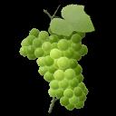 grape,fruit icon