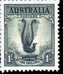 Australia Lyre BirdLyre Bird icon