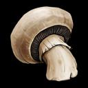 vegetable, fruit, mushroom icon