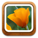 Flower, Gallery icon