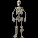 Standing skeleton icon