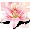 lv, lily, artdesigner icon