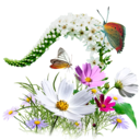 flowers,wildflowers icon