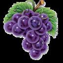 fruit,grapes icon