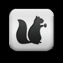 animal,squirrel icon