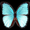 morphomenelaushubner,butterfly icon