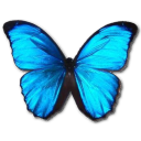 morphomenelaus,butterfly icon
