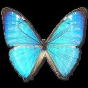 morphozephyritismale,butterfly icon