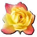 Rose Yellow 2 icon