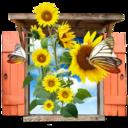 flowers,sunflowers,window icon