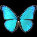 morphorhetenorcacica,butterfly icon