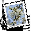 Blooming Cherries icon