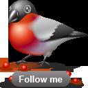 bird, social network, sn, bullfinch, twitter, social, animal icon